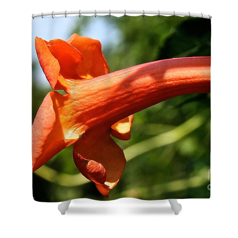 Plant Shower Curtain featuring the photograph Trumpet by Susan Herber