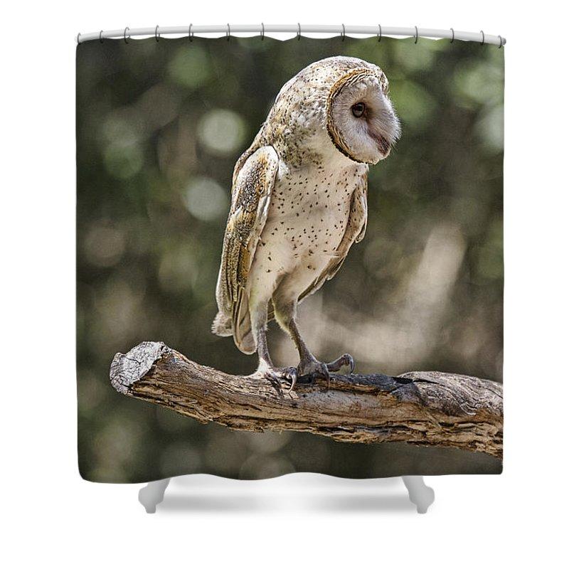 Barn-owl Shower Curtain featuring the photograph Vantage Point V4 by Douglas Barnard