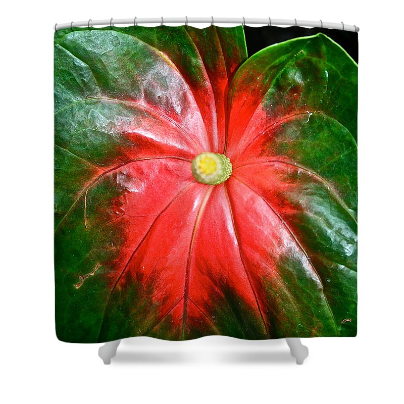 Tropical Plant Shower Curtain featuring the photograph Vibrant by Susan Herber