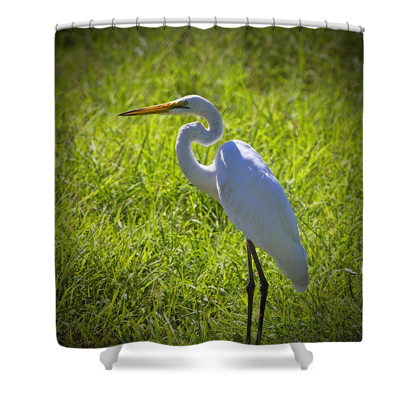 White Egret Shower Curtain featuring the photograph White Egret by Douglas Barnard