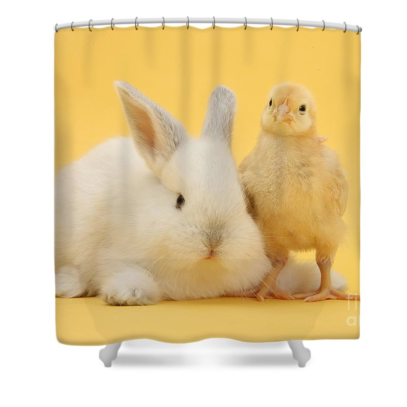 Nature Shower Curtain featuring the photograph White Rabbit And Bantam Chick On Yellow by Mark Taylor