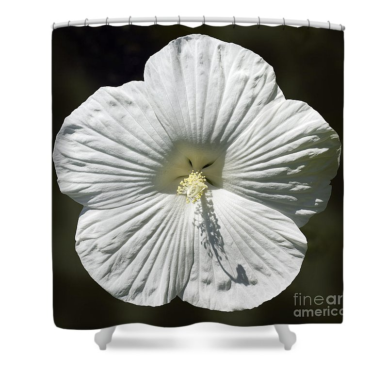 White Rose Mallow Hibiscus Shower Curtain For Sale By Tony Cordoza