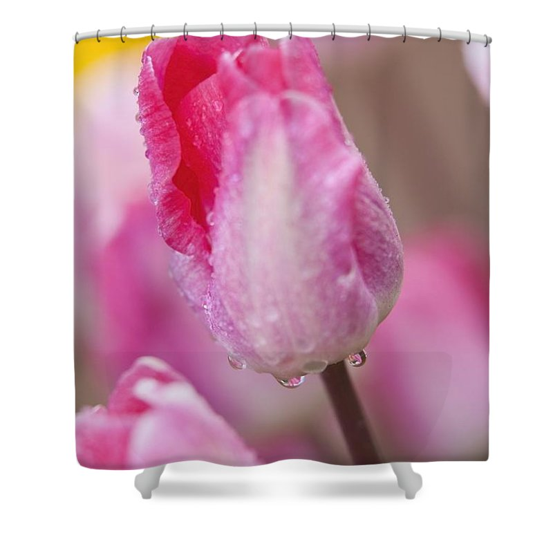 Drop Shower Curtain featuring the photograph Woodburn, Oregon, United States Of by Craig Tuttle