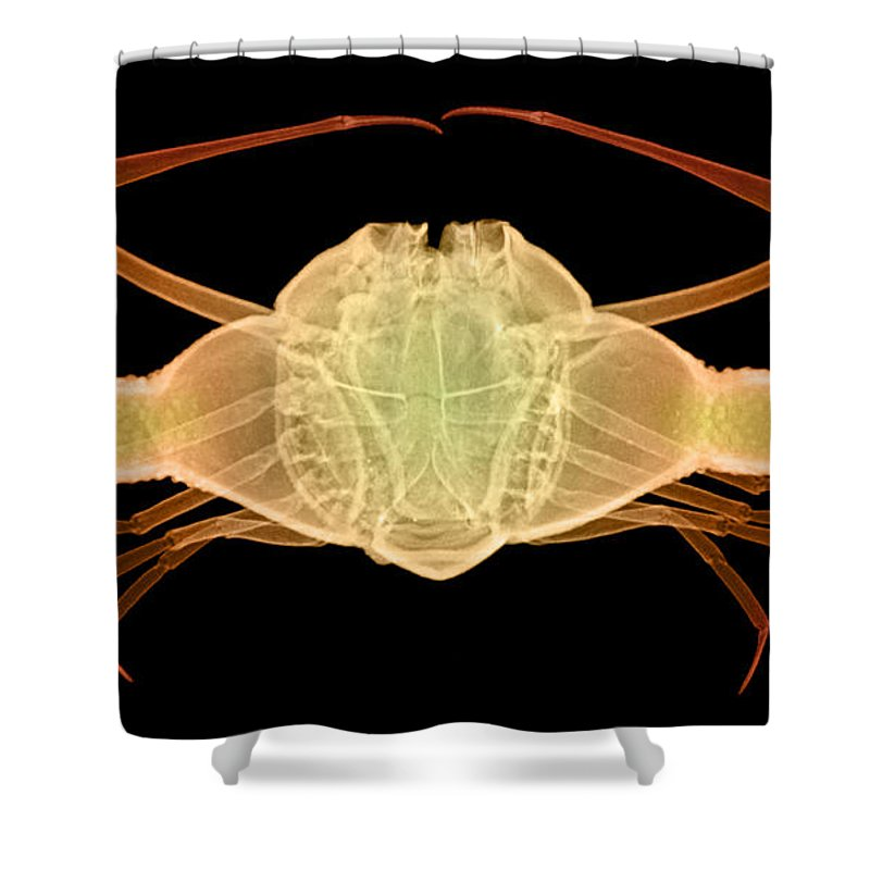 Xray Shower Curtain featuring the photograph X-ray Of Deep Water Crab by Ted Kinsman