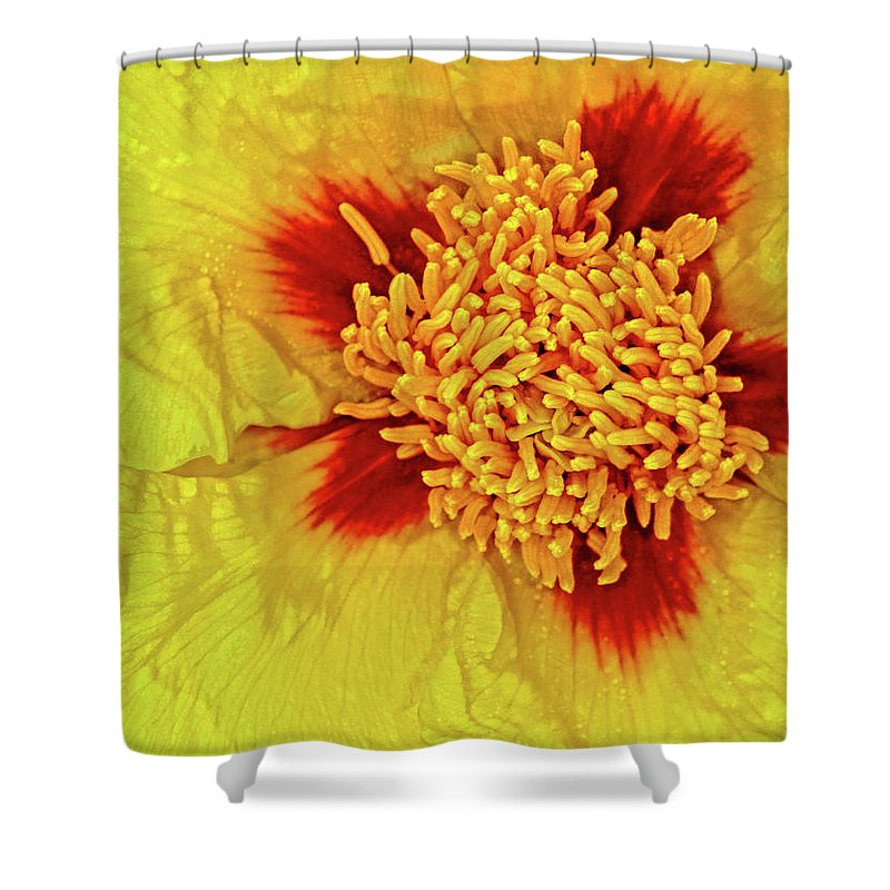 Peony Shower Curtain featuring the photograph Yellow Peony by Dave Mills