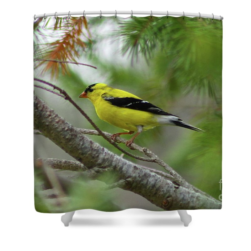 Bird Shower Curtain featuring the photograph Yellow by Rick Monyahan