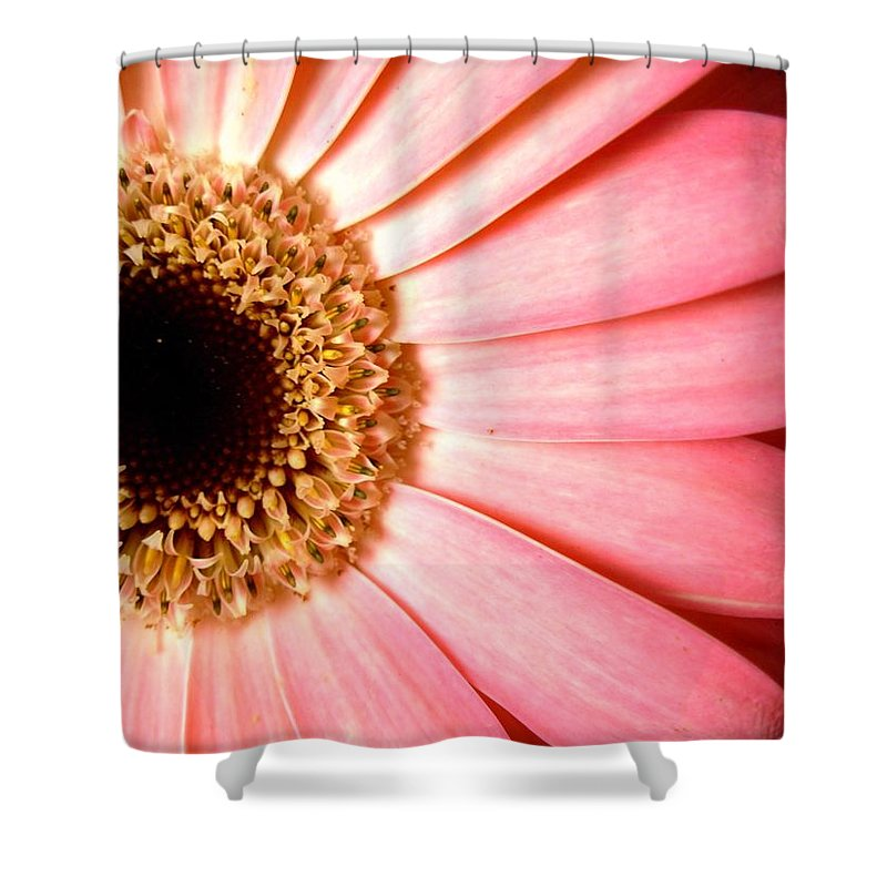 Gerbera Photographs Shower Curtain featuring the photograph 1067.2.c by Kimberlie Gerner