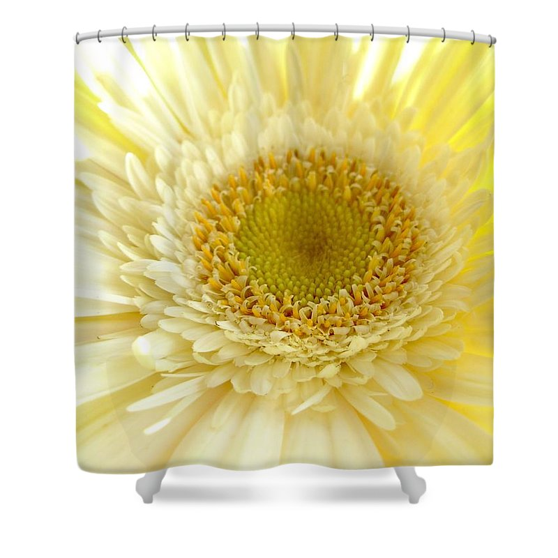 Gerbera Photographs Shower Curtain featuring the photograph 1186a1 by Kimberlie Gerner