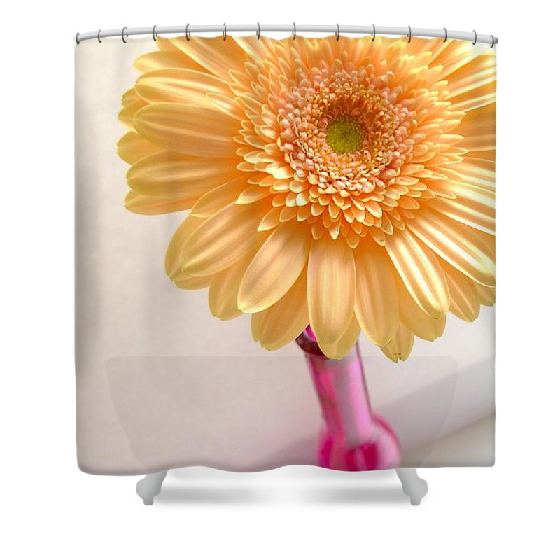 Gerbera Photographs Shower Curtain featuring the photograph 1323-001.2.c1 by Kimberlie Gerner