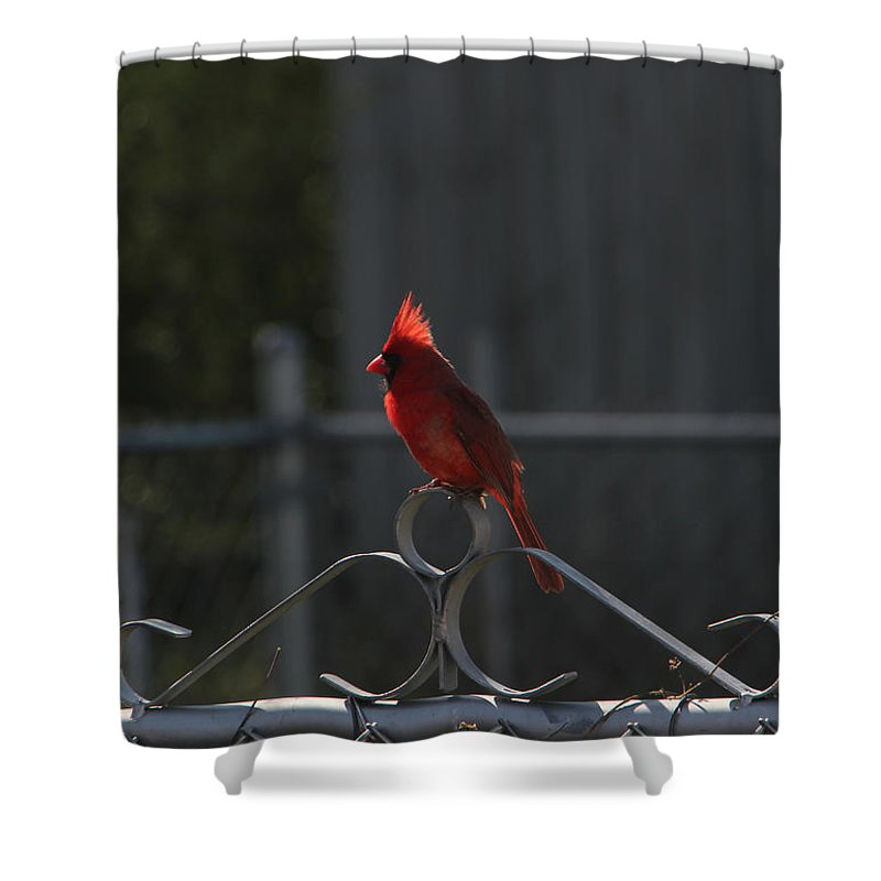 Tn Shower Curtain featuring the photograph 1417 Fenced In by Ericamaxine Price