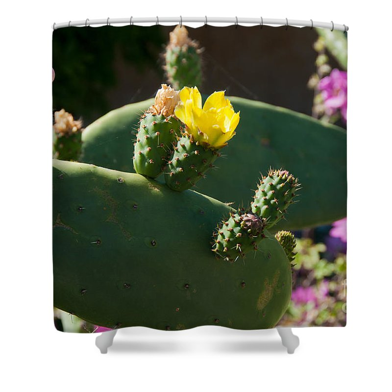 Cactus Shower Curtain featuring the digital art Gardens In Carmel Monastery by Carol Ailles