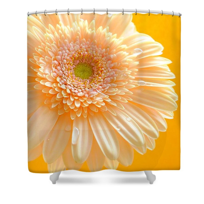 Gerbera Photographs Shower Curtain featuring the photograph 1527-002c by Kimberlie Gerner