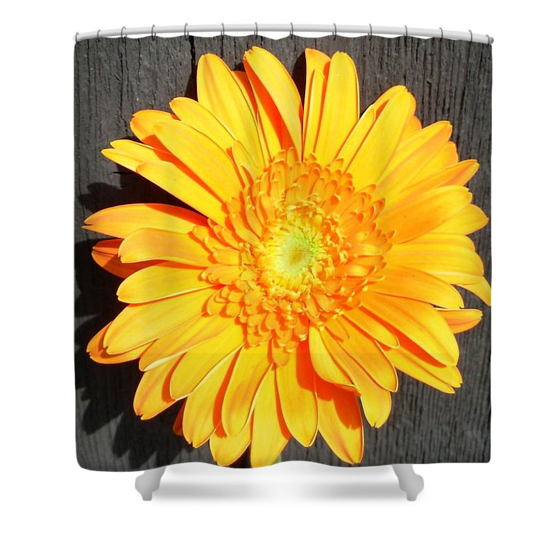 Gerbera Photographs Shower Curtain featuring the photograph 1599-001 by Kimberlie Gerner