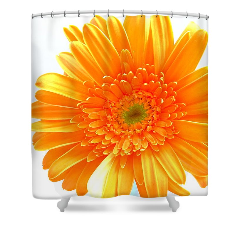 Gerbera Photographs Shower Curtain featuring the photograph 1609-001 by Kimberlie Gerner