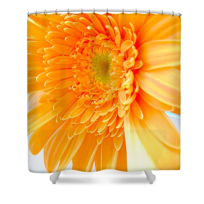Gerbera Photographs Shower Curtain featuring the photograph 1614c-002 by Kimberlie Gerner