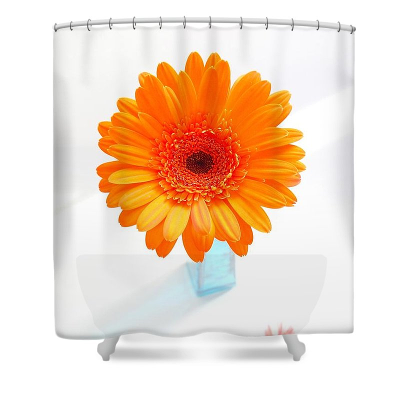 Gerbera Photographs Shower Curtain featuring the photograph 1620c-001 by Kimberlie Gerner