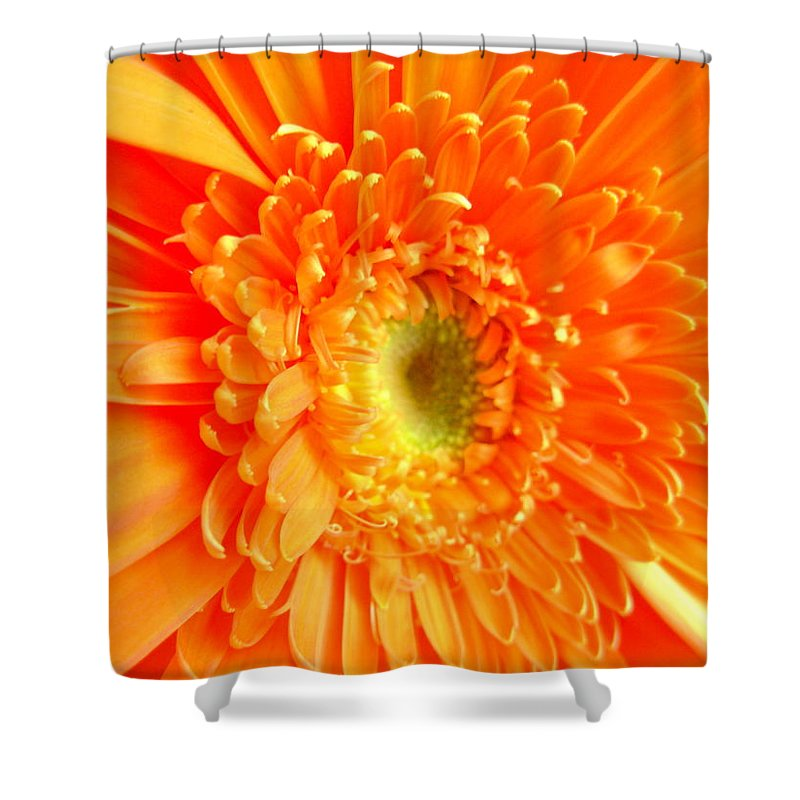 Gerbera Photographs Shower Curtain featuring the photograph 1628-001 by Kimberlie Gerner