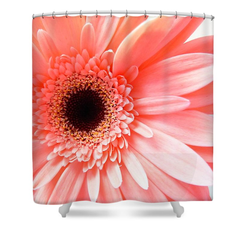 Gerbera Photographs Shower Curtain featuring the photograph 1631c by Kimberlie Gerner