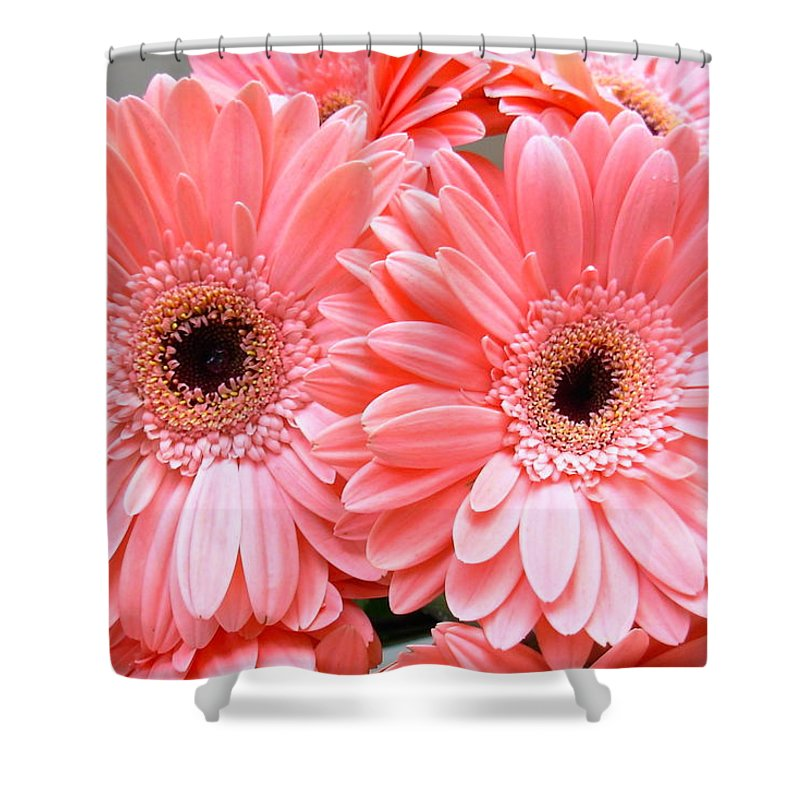 Gerbera Photographs Shower Curtain featuring the photograph 1856-004 by Kimberlie Gerner