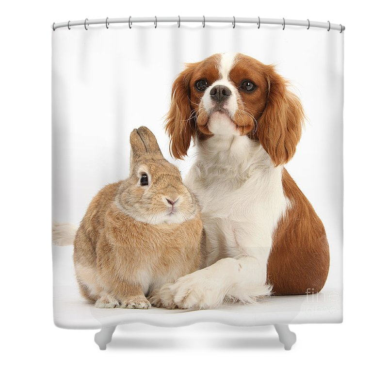 Nature Shower Curtain featuring the photograph Cavalier King Charles Spaniel by Mark Taylor