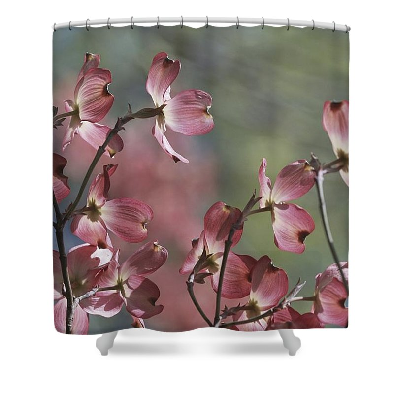 Scenes And Views Shower Curtain featuring the photograph Close View Of Pink Dogwood Blossoms by Darlyne A. Murawski