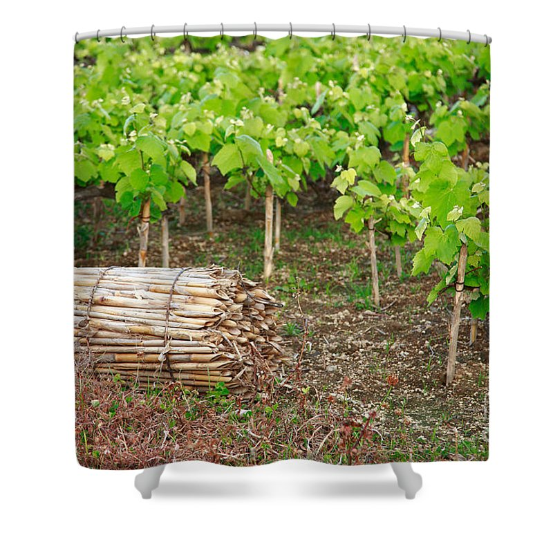 Grape Vines Shower Curtain featuring the photograph Grape Vines by Gaspar Avila