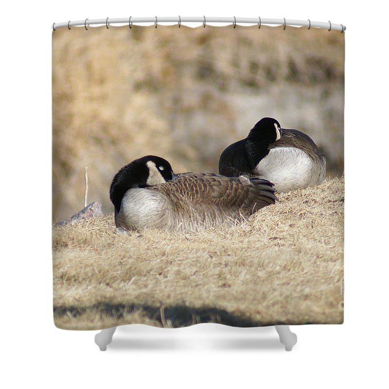 Goose Shower Curtain featuring the photograph Nap Time by Lori Tordsen
