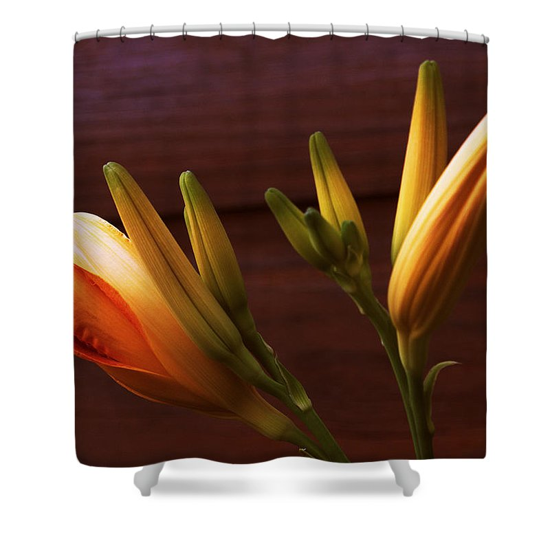 Daylily Shower Curtain featuring the photograph Orange Daylily by Mel Hensley