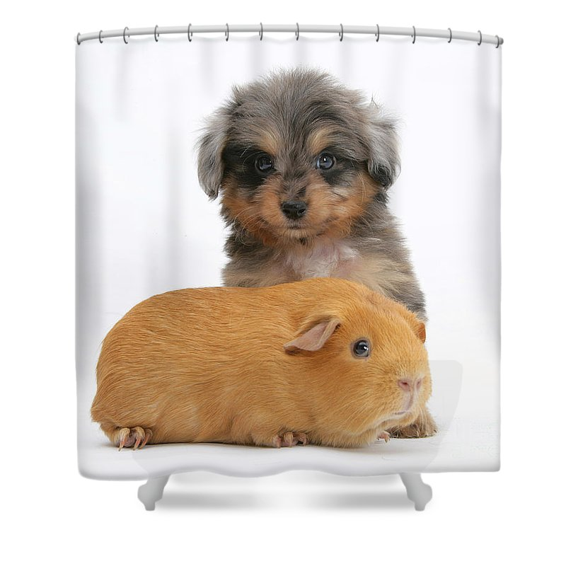 Animal Shower Curtain featuring the photograph Puppy And Guinea Pig by Mark Taylor