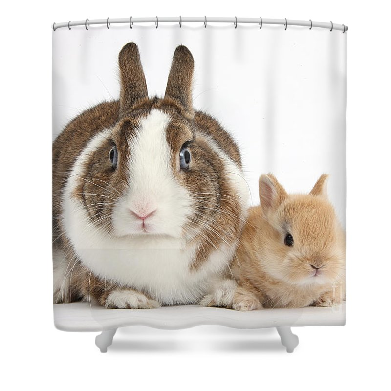 Nature Shower Curtain featuring the photograph Rabbit And Baby Bunny by Mark Taylor