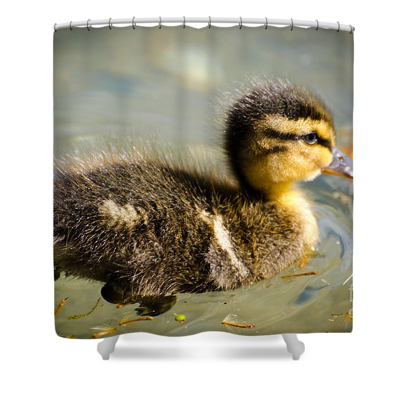 Duck Shower Curtain featuring the photograph Young Duck by Mats Silvan