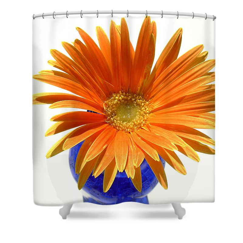 Gerbera Photographs Shower Curtain featuring the photograph 2102a by Kimberlie Gerner