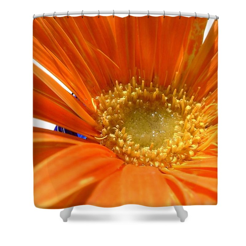 Gerbera Photographs Shower Curtain featuring the photograph 2106zc-002 by Kimberlie Gerner