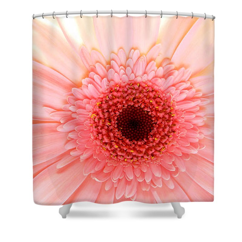 Gerbera Photographs Shower Curtain featuring the photograph 2149a by Kimberlie Gerner