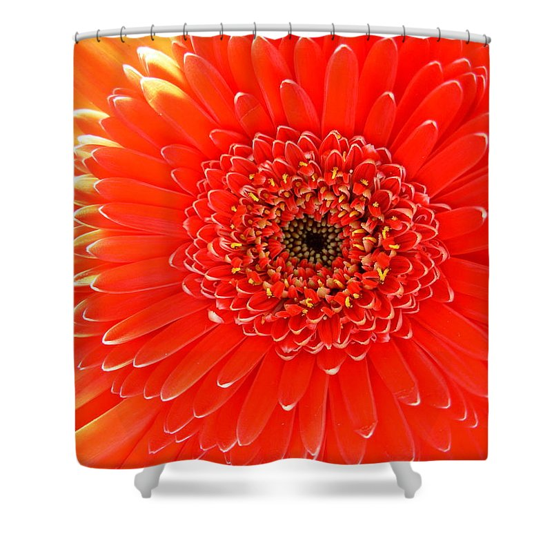 Gerbera Photographs Shower Curtain featuring the photograph 2153 by Kimberlie Gerner