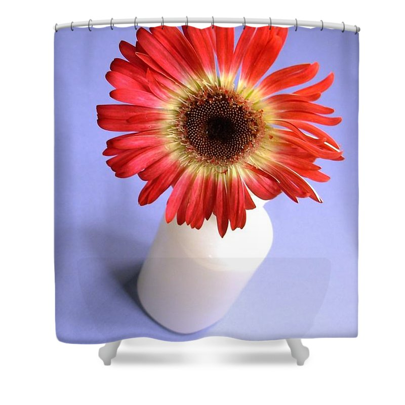 Gerbera Photographs Shower Curtain featuring the photograph 2211c-001 by Kimberlie Gerner