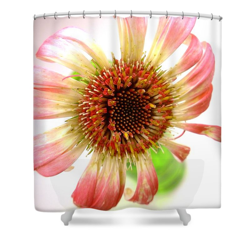 Gerbera Photographs Shower Curtain featuring the photograph 2269c by Kimberlie Gerner