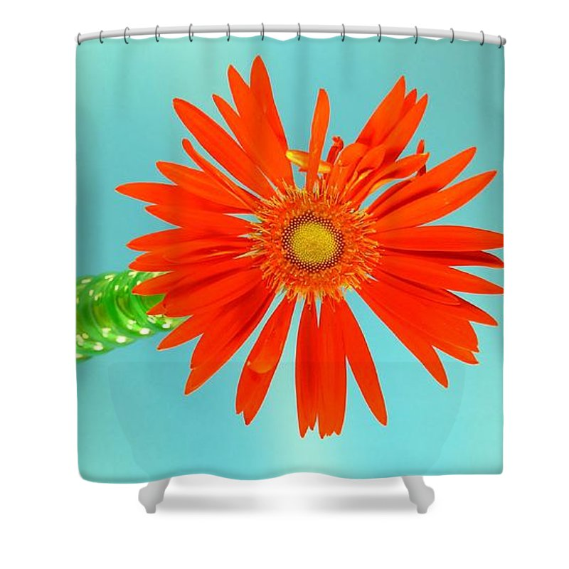 Gerbera Photographs Shower Curtain featuring the photograph 2278c by Kimberlie Gerner