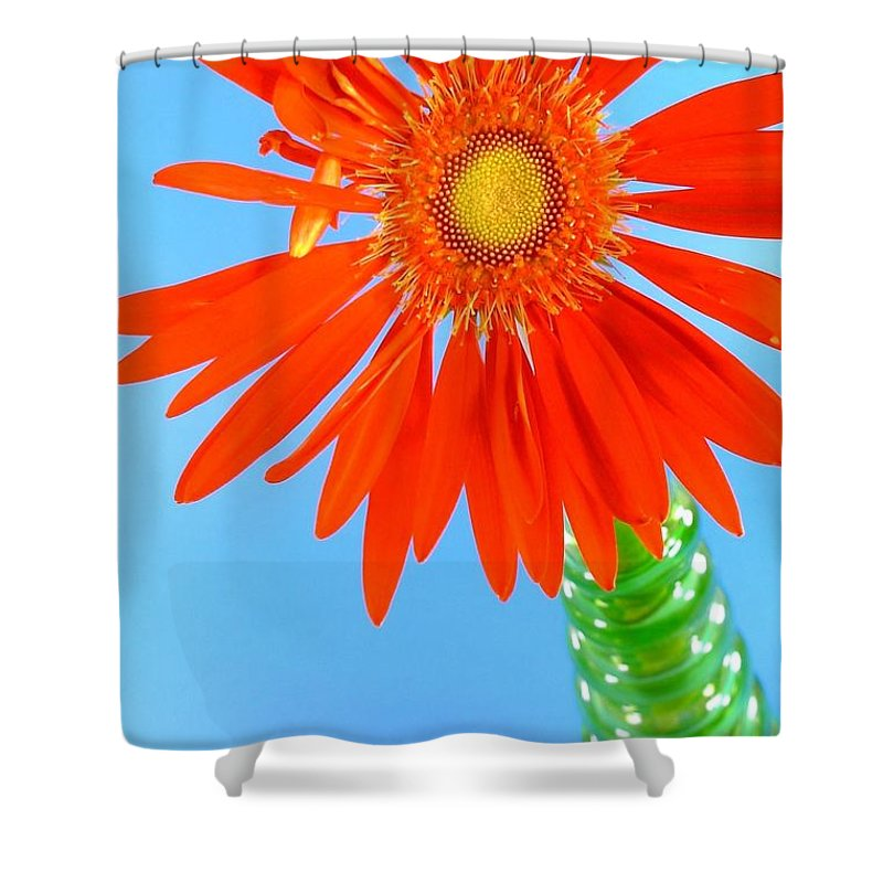 Gerbera Photographs Shower Curtain featuring the photograph 2278c2-003 by Kimberlie Gerner