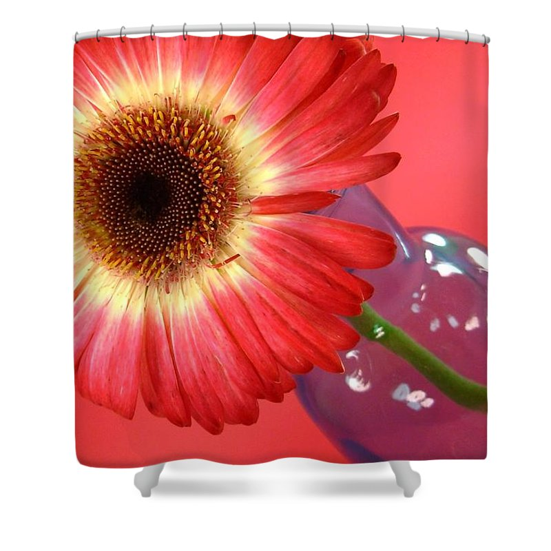 Gerbera Photographs Shower Curtain featuring the photograph 2399c-001 by Kimberlie Gerner