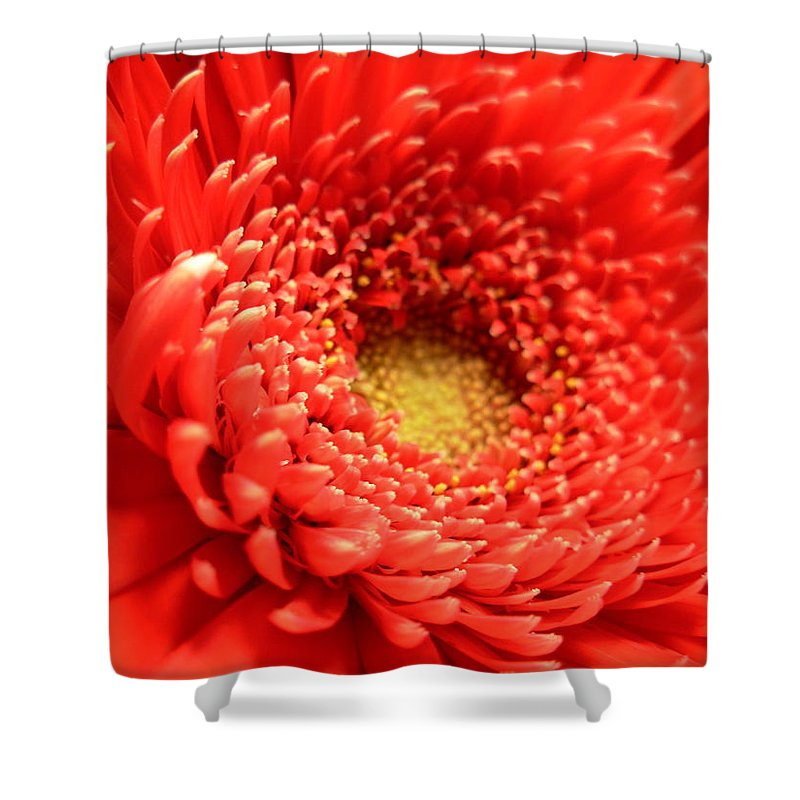 Gerbera Photographs Shower Curtain featuring the photograph 2589 by Kimberlie Gerner