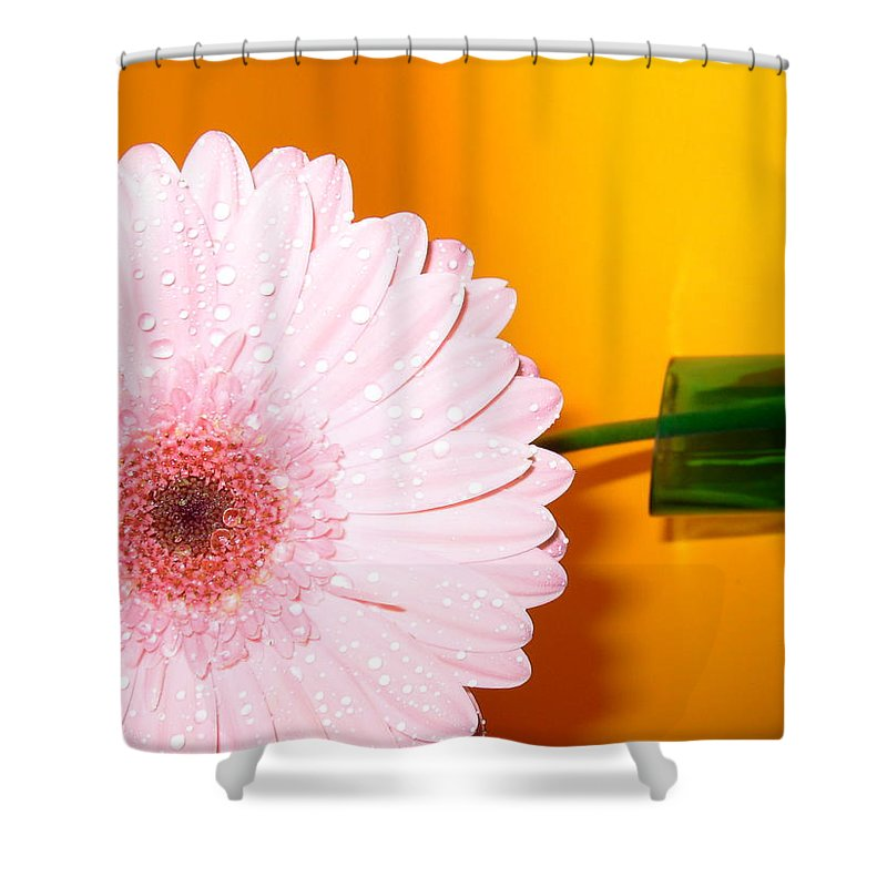 Gerbera Photographs Shower Curtain featuring the photograph 2841 by Kimberlie Gerner
