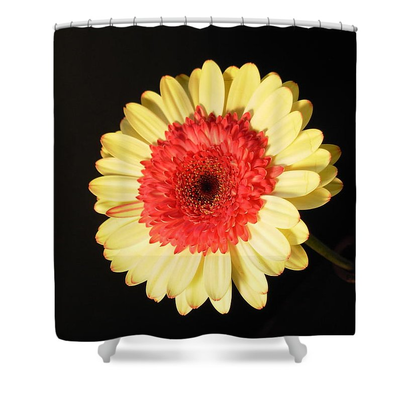 Gerbera Photographs Shower Curtain featuring the photograph 2973 by Kimberlie Gerner