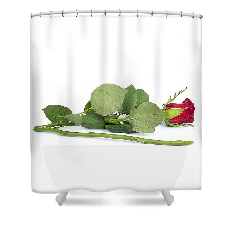 With Shower Curtain featuring the photograph Red Tulip by Bernard Jaubert