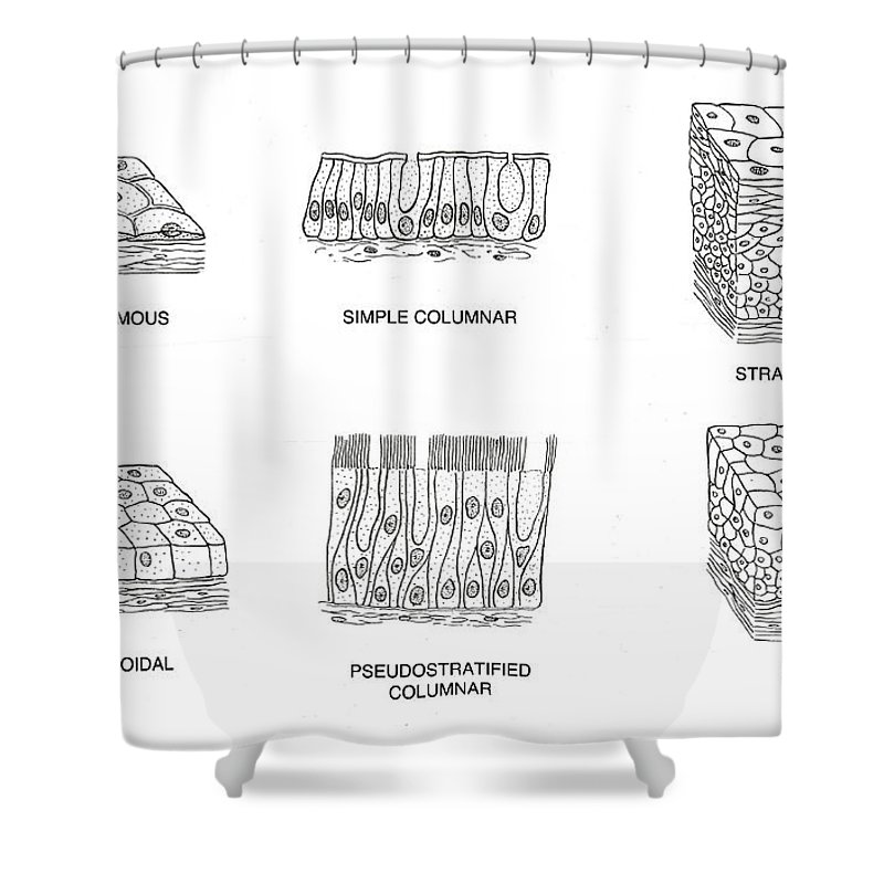 Science Shower Curtain featuring the photograph Types Of Epithelial Cells by Science Source