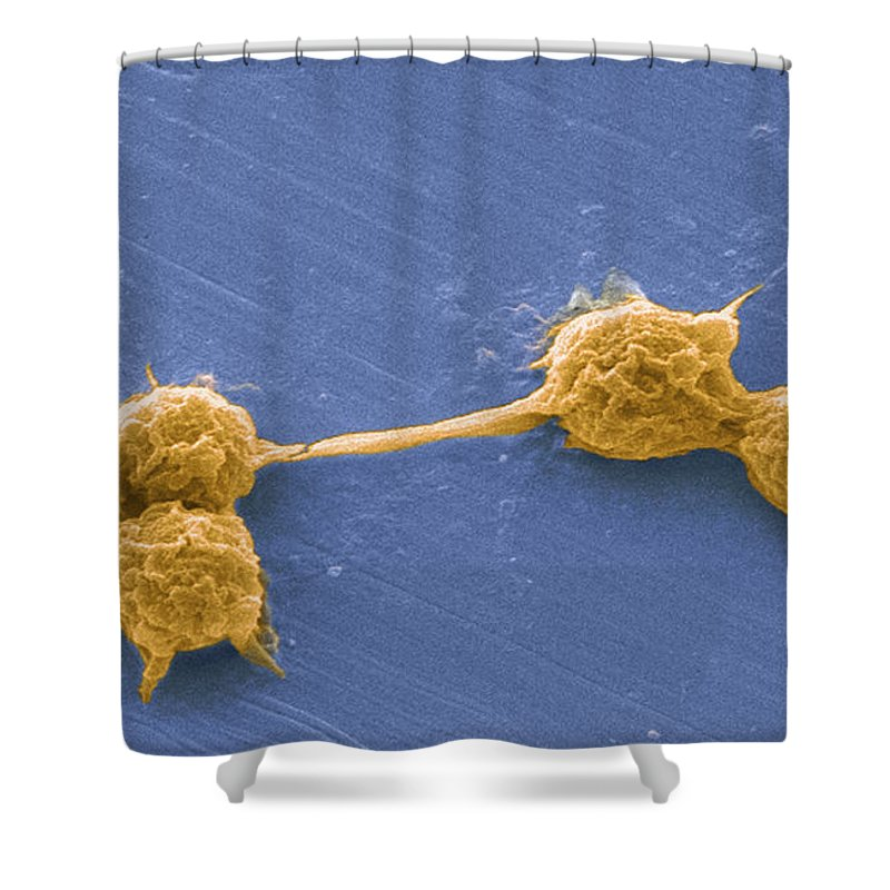 Scanning Electron Micrograph Shower Curtain featuring the photograph Water Biofilm With H. Vermiformis Cysts by Science Source