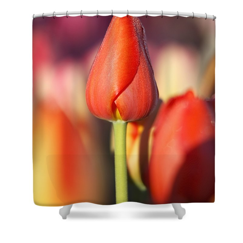 Oregon Shower Curtain featuring the photograph Woodburn, Oregon, United States Of by Craig Tuttle