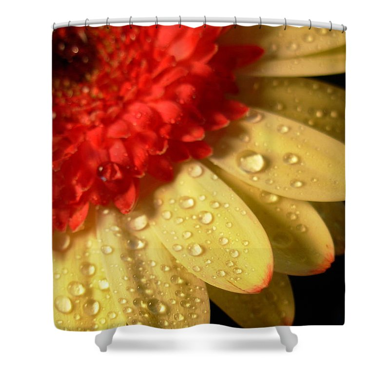 Gerbera Photographs Shower Curtain featuring the photograph 3096 by Kimberlie Gerner