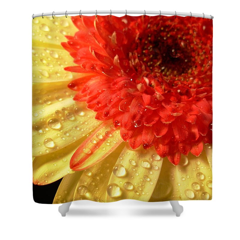 Gerbera Photographs Shower Curtain featuring the photograph 3100 by Kimberlie Gerner