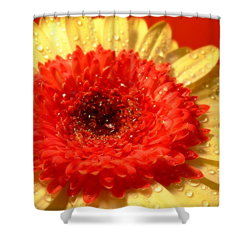 Gerbera Photographs Shower Curtain featuring the photograph 3164-001 by Kimberlie Gerner